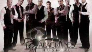 QUEBRADITA EN EL MAR ALACRANES MUSICAL PROMO (2010)