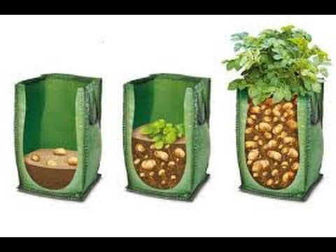 Огород без хлопот Высаживаем картофель глазками в мешок.Часть 1.