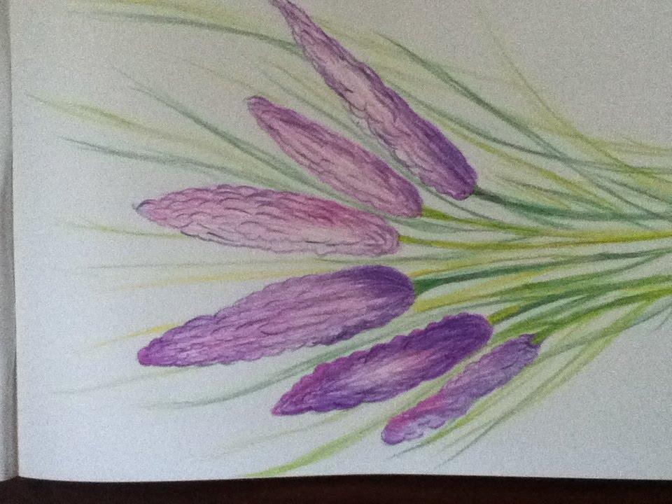 lavender flower drawing in simple steps youtube