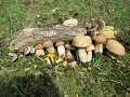 Summer Cep, Boletus reticulatus, A Charcoal Burner and 2 types of chanterelle