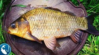 Как поймать большого карася на #фидер. Ловля карася весной в пруду | Рыбалка с Родионом