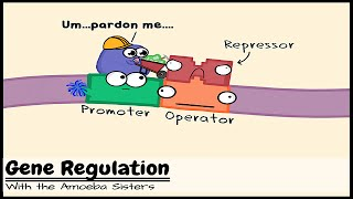Gene Expression And Order Operon