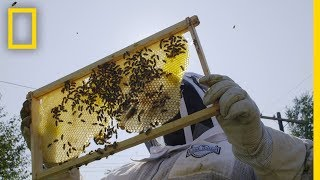 Detroits Urban Beekeepers are Transforming the Citys Vacant Lots | Short Film Showcase