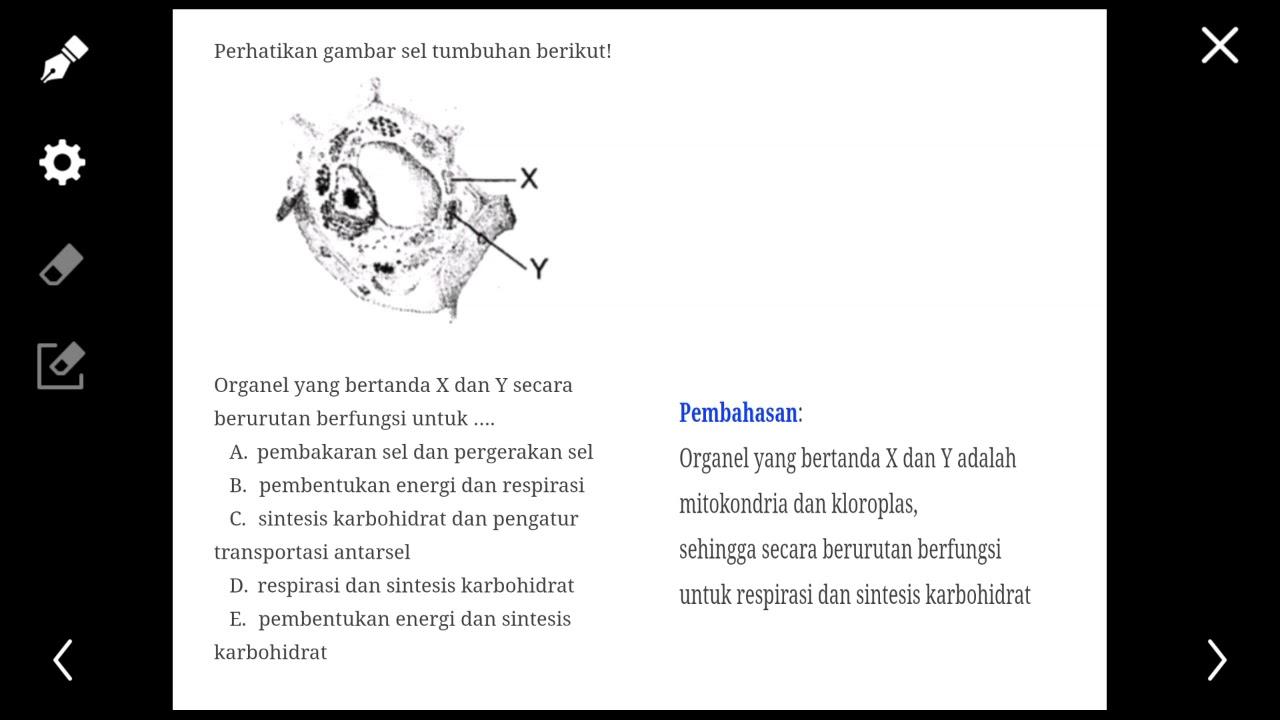 Biologi Organel Yang Bertanda X Dan Y Secara Berurutan Berfungsi Untuk Youtube