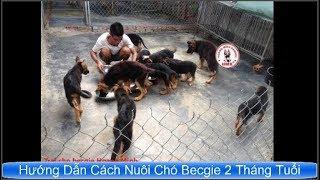 Hướng Dẫn Cách Nuôi Chó Be¢gie 2 Tháng Tuổi