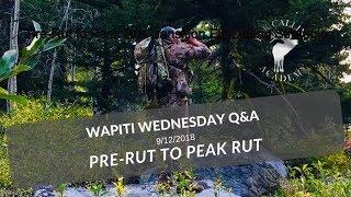 Gambar cover Peak Rut Elk Calling Tips | Wapiti Wednesday Q&A - EP 33