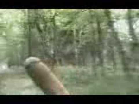 Skogtur film