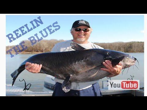 Lake Wylie 82lb Blue Cat
