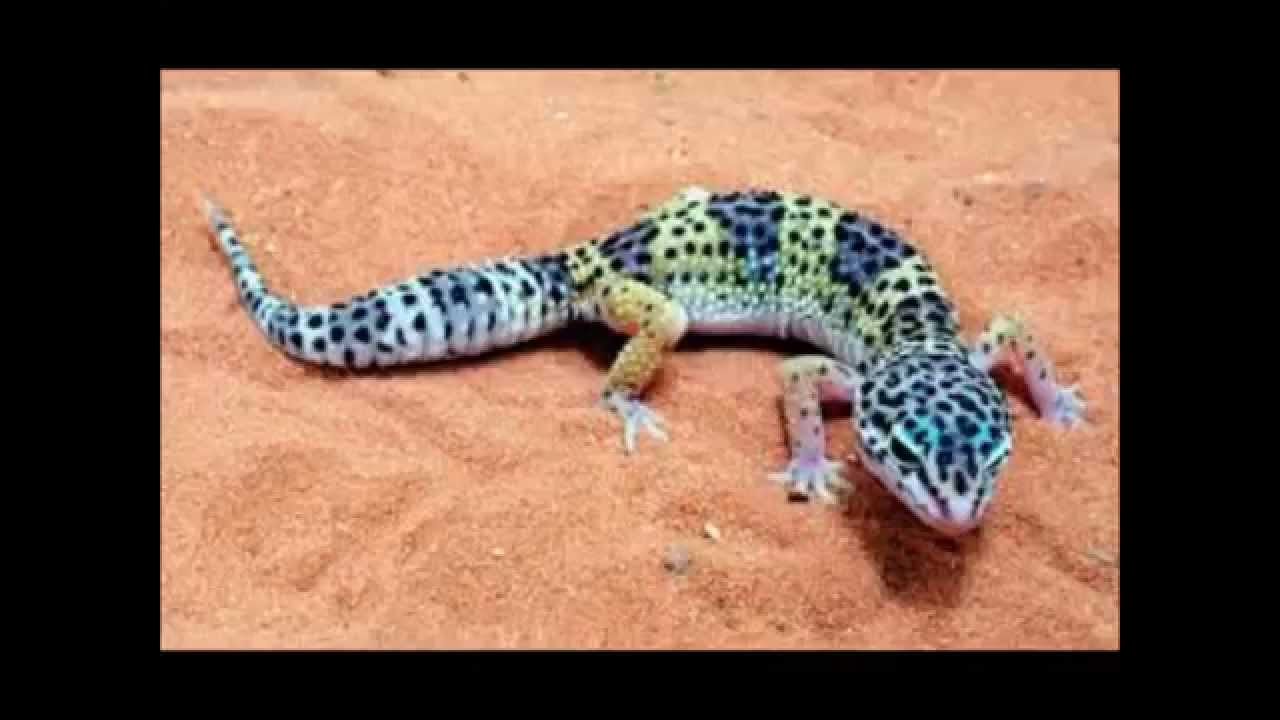 Which reptile is the best?