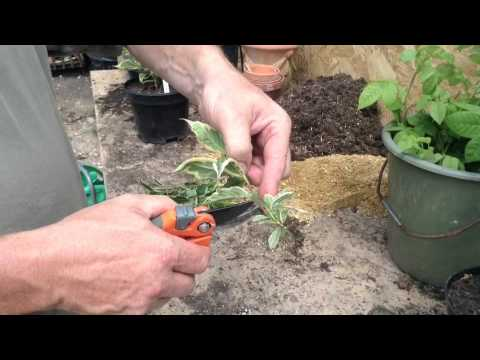 How To Start Your Own Plant Nursery - Part 1