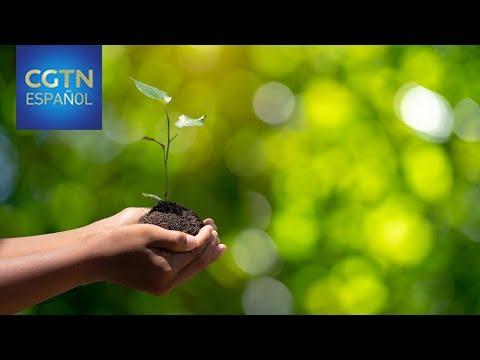el-tema-central-del-día-internacional-de-la-tierra-2019-es-el-efecto-de-los-humanos-sobre-el-planeta