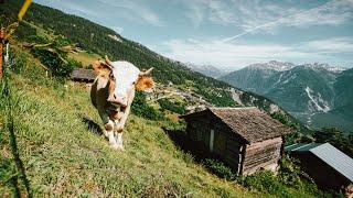 Suisse : un village pourrait payer 21.000 euros ses nouveaux h…