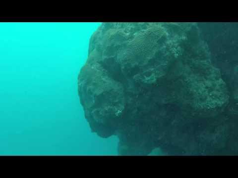 Australie Grande barrière de Corail Plongée 10 mètres Hastings reef / Australia Dive 10 m