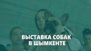 Выставка собак в Шымкенте