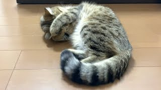 初めての発情期に戸惑いが隠せない子猫…。