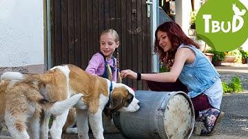 Welpenschutz (Folge 59)   Tiere bis unters Dach   SWR Kindernetz