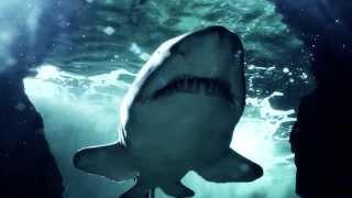 Gli squali - Acquario di Cattolica