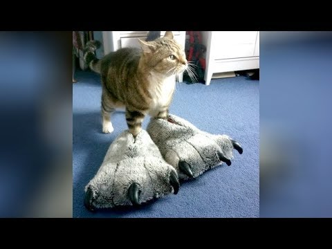 FUNNY VIDEOS that will make you OBSESSED WITH CATS // The FUNNIEST CAT compilation