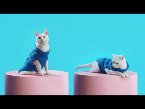 Wish TV Commercial, Amazing Things Fashion   iSpot tv