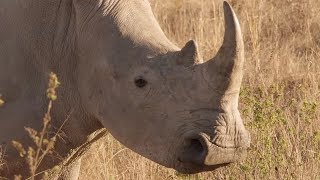 IBM Helps Protect Endangered African Rhinos with IoT Technology