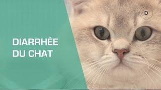 Diarrhée du chat - Animaux