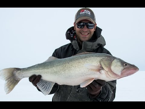 Amazing 14 Pound Walleye - Lake Winnipeg - March 2016