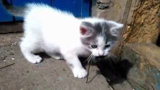 котёнок и мышь