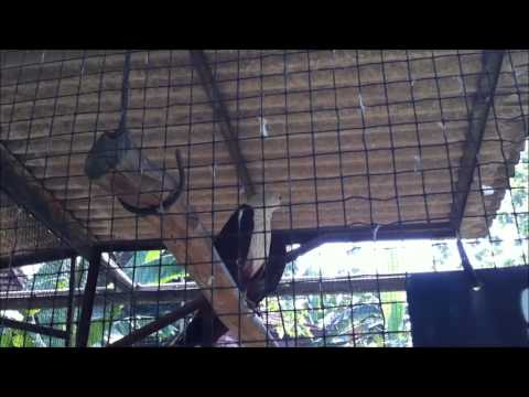 Bald Eagle Trapped In A Cage