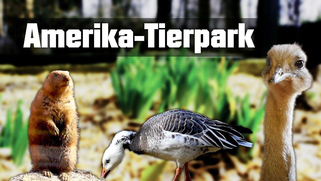 Amerika Tierpark Limbach Oberfrohna Youtube