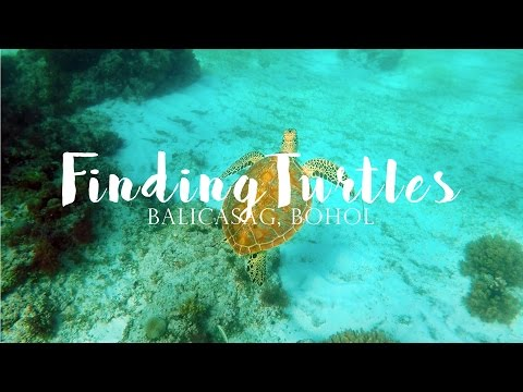 Finding Turtles in Bohol ➳ Cat'elle: My Wanderlust Diary