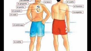 Dolor de cabeza - Barbara MacArthur - learn Spanish body parts