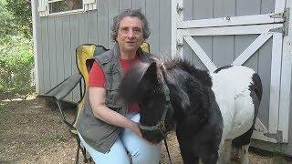 Слепая пенсионерка потратила все сбережения на лечение лошади-поводыря (новости)