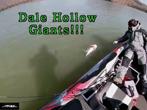 Land Of Giants!!! Dale Hollow Lake