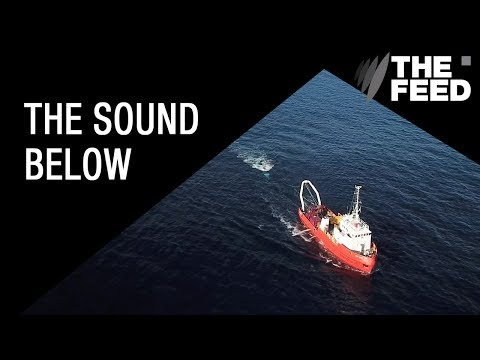 The Sound Below: The cost of seismic testing