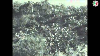 """""""Cartolina"""" - Sicilia - TCI (1950)"""