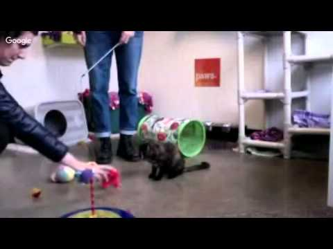 Live Seattle Cats - ADOPT NOW from Paws Cat City