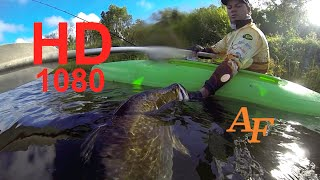 Barra Big Fish Caught in Kayak Fishing Monster Fish Barramundi Andysfishing EP.105