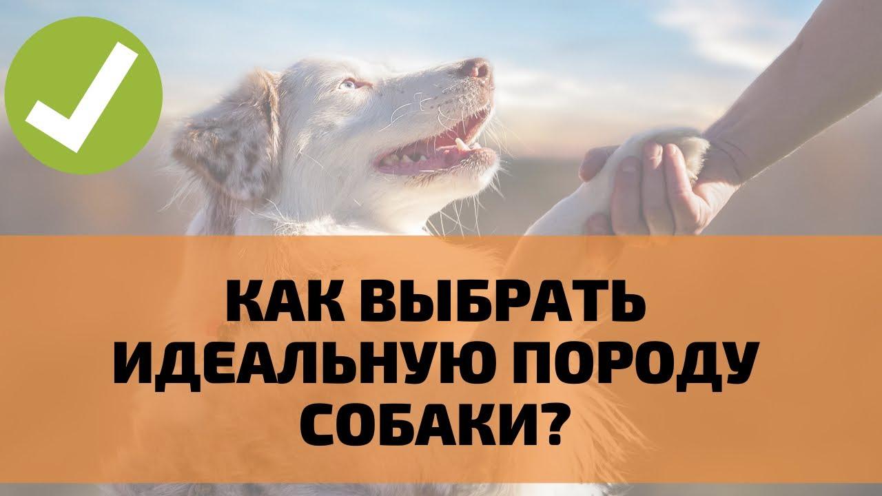 Как выбрать себе идеальную собаку? Какая порода собак мне подходит?