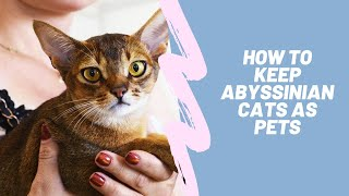 Abyssinian Cats  The Ultimate Pet Guide  Purchasing, Supplies,  Health, Diet, Breeding, and More