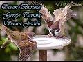 Masteran Burung Gereja Tarung Sangat Cocok Buat Masteran  Mp3 - Mp4 Download