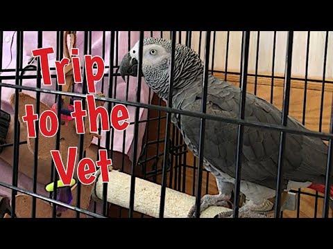 Einstein's annual well bird veterinarian visit