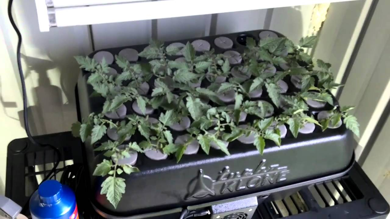 Australian Grow Hydroponics House and Garden Nutrients Turbo