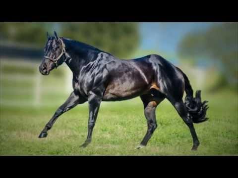One n only 2007 brown aqha stallion youtube stopboris Choice Image