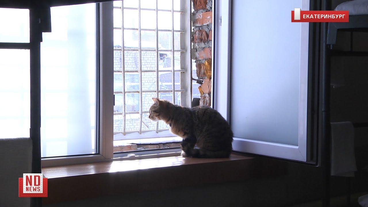 Пожизненный срок для котиков. Подробности из колонии строгого режима