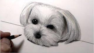 白い何かを描きたくて(・o・)犬描くの2回目だけど白いからラクだろって...