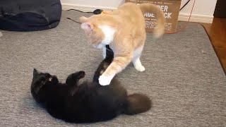 さっきまで元気に遊んでた猫が突然苦しそうな呼吸になりました 291話