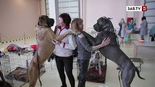 Звание чемпиона: в Чите прошла выставка собак
