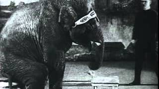 Jumbo the Elephant historical film footage 1919