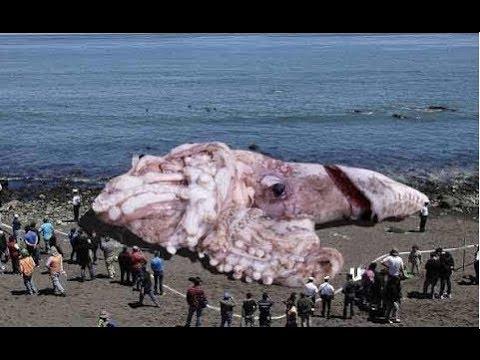 【謎・未確認UMA】超巨大生物の画像