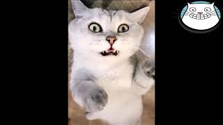 Best Cute Cats The Most Funny Cats Video